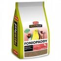 FonioPaddy Jarad