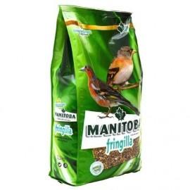 Mixtura  Fringilia (Manitoba)