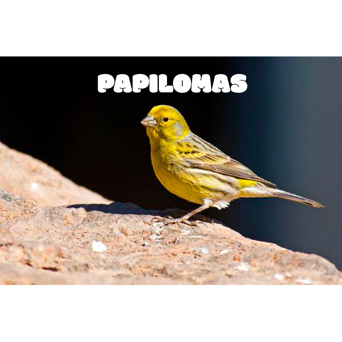 PAPILOMAS