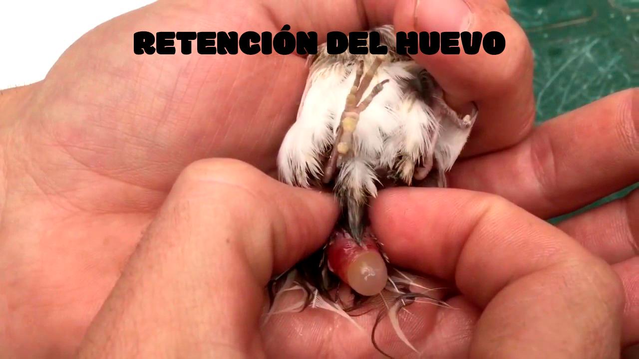 RETENCIÓN DEL HUEVO